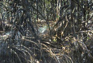 Mangrove, , 150 x 200 cm, 1992, Gouache und Öl auf Leinwand