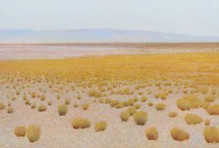 Ohne Titel, , 100 x 150 cm, 2011, Öl auf Nessel