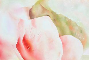 White Blossom, 70 x 80 cm, 2013, Öl auf Leinwand